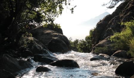 Fluß mit Bäumen links und rechts