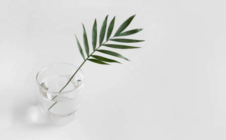 Ein einzelnes Blatt in einem Glas vor weißem Hintergrund